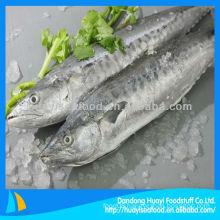 fresh IQF Japanese Spanish mackerel fish