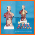 28 Cm Модель человеческого торса с 15 частями анатомической модели человека
