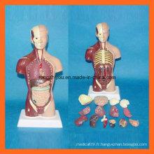28 Cm Modèle de torse humain avec 15 parties du modèle anatomique humain