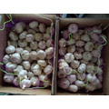 Case Of Pure Natural Purple Garlic