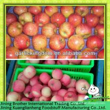 Китай красный гала яблоко экспортер