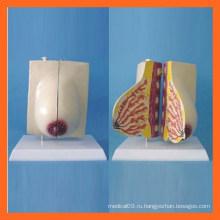 Женская лактационная анатомическая модель груди, женские репродуктивные модели груди