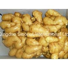 Gingembre avec déshydraté (5% -20%) Gingerols