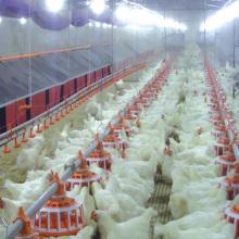 Equipo completo de granja de aves de corral para producción de pollo