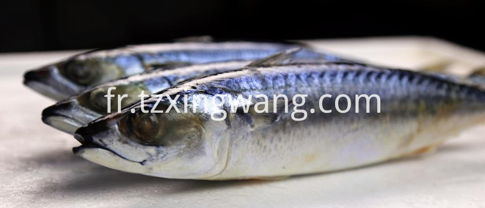 Hot Sales High Quality Frozen Mackerel