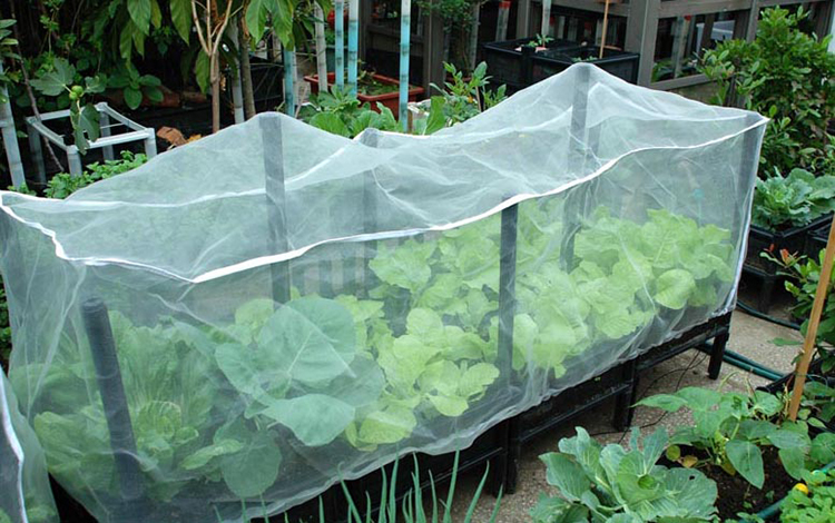 Insect-Proof Net
