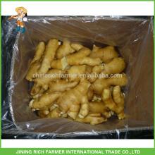 Légumes frais Gingembre chinois Gingembre frais 150 g en carton
