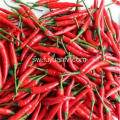 Hotsale Spicy Chaotian Chili
