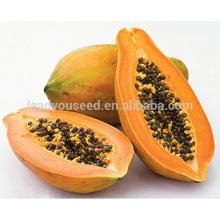 JM01 Giemda semillas de papaya de Taiwán hibridación temprana madurez precio