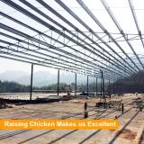 China Famous Factory Tianrui Design Morden Chicken Farm