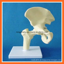 Menschliches anatomisches Simulations-Hüften-Gelenkskelett-Modell für medizinischen Unterricht