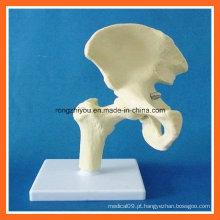 Modelo de esqueleto comum anca da simulação anatômica humana para o ensino médico
