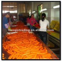venda por atacado cenouras da China
