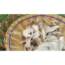 Cogumelo Porcini Branco Seco Grau B com Melhor Preço