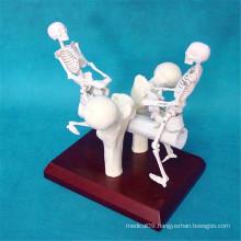 Artificial Skeleton Seesaw Bones Medical Model Gift