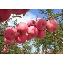 A Grade Fresh Red FUJI Apple