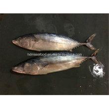 Fresh IQF Frozen Seafood Bonito Fish