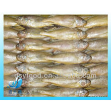 FROZEN BABY YELLOW CROAKER FISH(SEAFOOD)