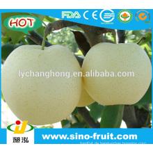 Goldener Birnenfruchtlieferant in China
