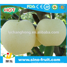 Fresh Crown Pear from China