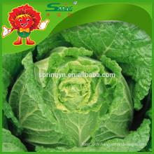 Chou longue Chignon frais vert