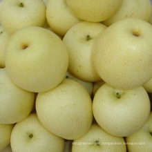 New Crop SGS Ya Pear (28/32/36/40/44)