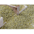 Bird Feed Green Millet In Husk for sale