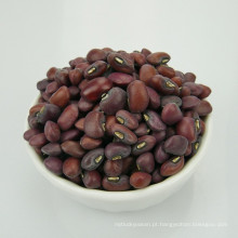classificação de exportação de feijão caupi 2016 colheita de alta qualidade selo quente