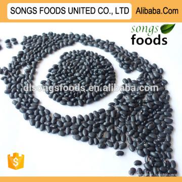 Fornecedores de feijão preto