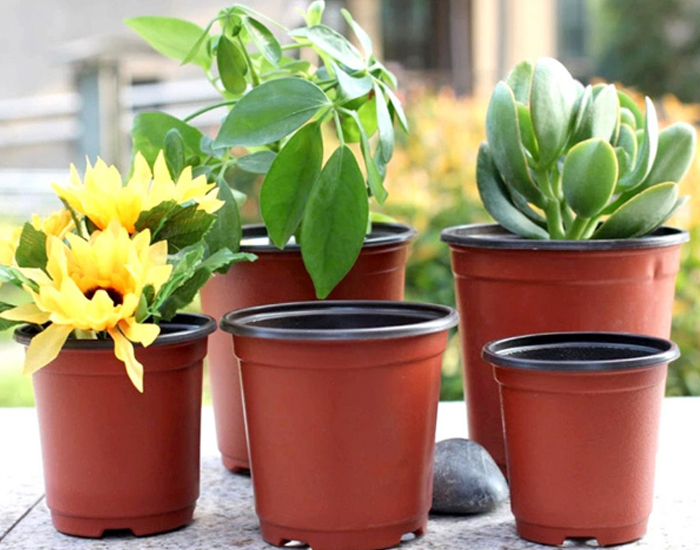 Colourful Garden Flower Growing Pot