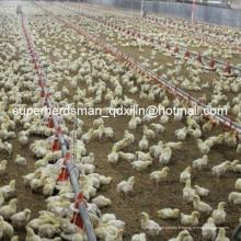 Set complet d'équipement automatique de volaille pour la ferme de poulets de chair