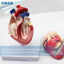 A06 (12008) Modèle de coeur de chien, modèles anatomiques animaux pour la référence du vétérinaire 12008