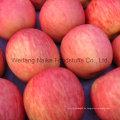 Neue Ernte frischer Apfel / Chines Obst von hoher Qualität