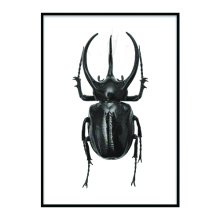 Wall Black Spider craft frame