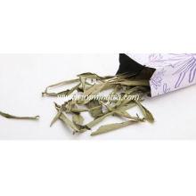 Tian Ju Cha ( Stevia Sweet Leaf )