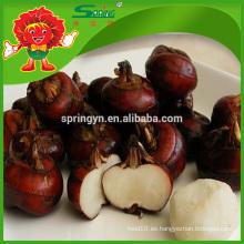 Rica nutrición frutas vegetales agua castaña