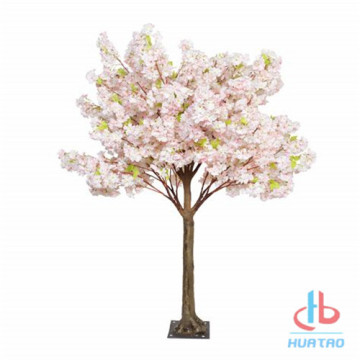 Cherry Blossom Tree colorato