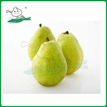 Nuevo cultivo ya pera / pera / pera ya fresca