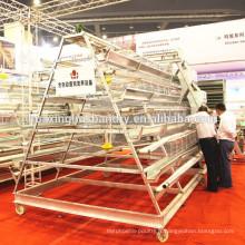 Conception de hangar de volaille de haute qualité avec système automatique complet