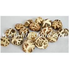De haute qualité, séché, comestible 2.5-3cm Champignons à fleurs blanches