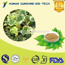 Extracto de planta Extracto de hoja de hiedra / Hedera Helix Extracto en polvo para combatir la inflamación y la tos y flema