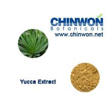 Médecine reproductrice Yucca Schidigera Sarsaponin 60%