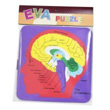 Kids eva foam A estrutura do cérebro Learning teaching puzzle