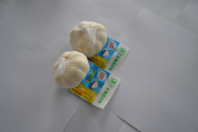 Wholesale Garlic With Low Price