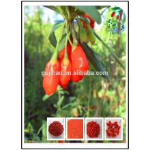 cosecha Himalayan Certified Organic Goji berry, Tibet goji berry