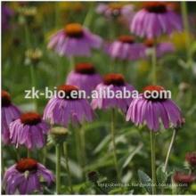 Extracto de Echinacea orgánico de alta calidad de China