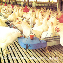 Automatic Chicken Farm Equipment für das Züchterhaus
