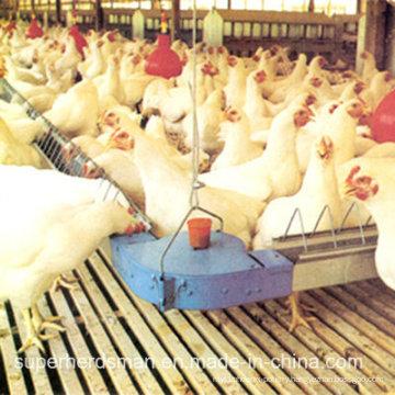 Automtic Chicken Farm Equipment for Breeder House