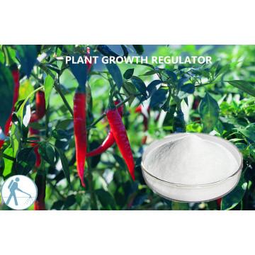 Plant Extract Regulator Pgr Kintin