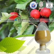 Poudre de feuille d'aubépine d'extrait naturel d'aubépine avec FDA enregistré